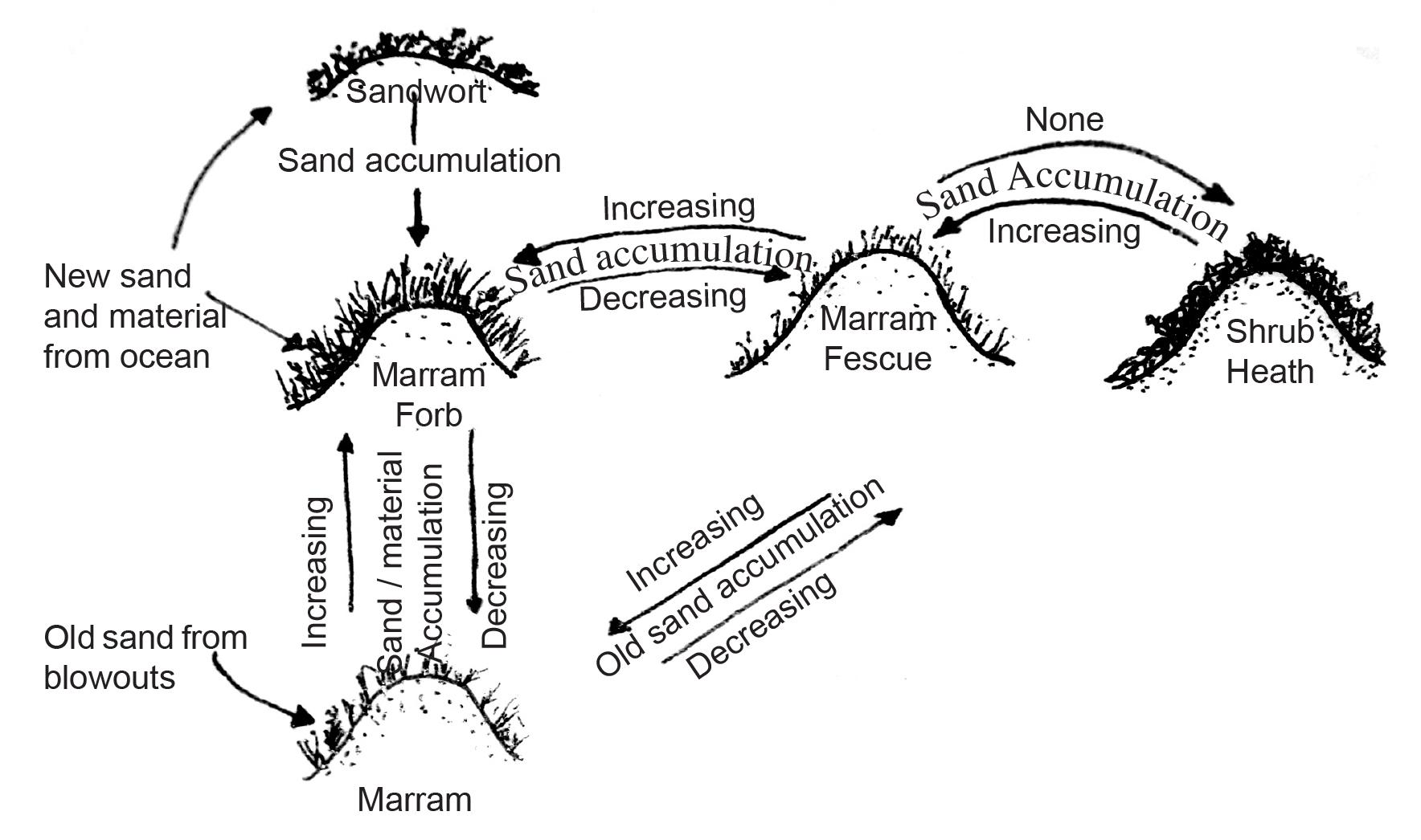 cycle diagram 1