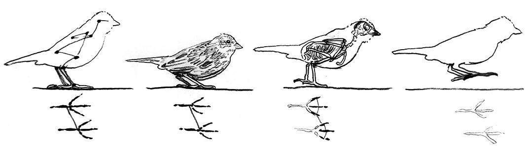 Bird movement